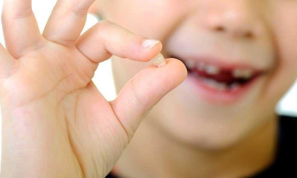 Cu ndo se caen los dientes de leche club ratoncito p rez for Suelo que se me caen los dientes